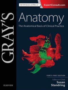 gray-anatomy-41e